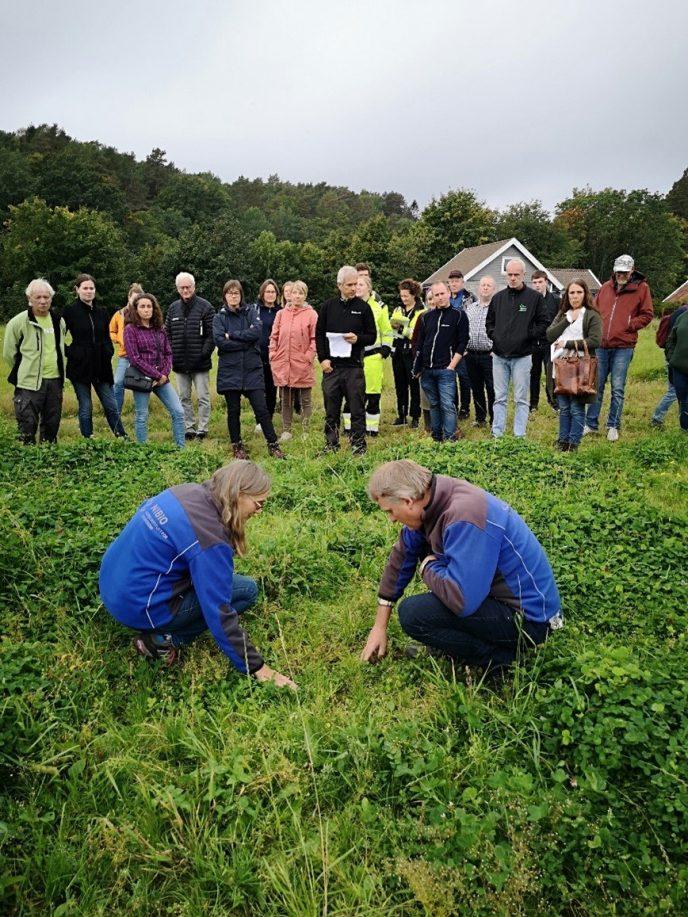 Svalheim og Aamlid i blomsterenga for pollinerende arter Foto Inger Slagedal