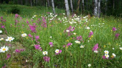 Blomstereng Nibio