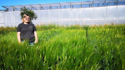 Kompostfelt korn og grovfor 10 07 2019 IBS