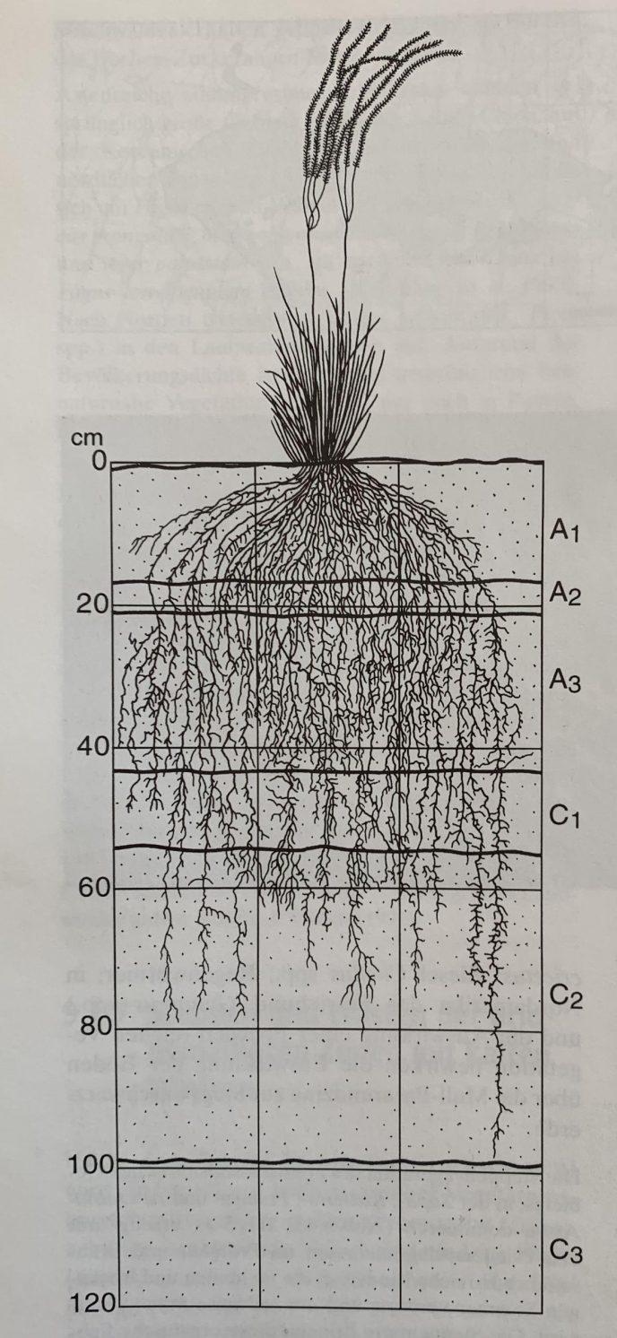 Sti cap rotsystem. Shalyt, M. S. (1950)